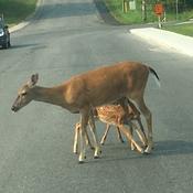 Traffic Jam in Kenora Ontario