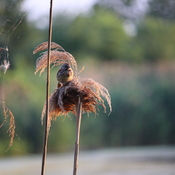 Bird and Spider Web