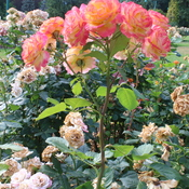 Heatwave effect on plants
