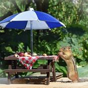 Chippie's summer picnic.