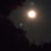 4:00 a.m. moon, taken through kitchen screen window