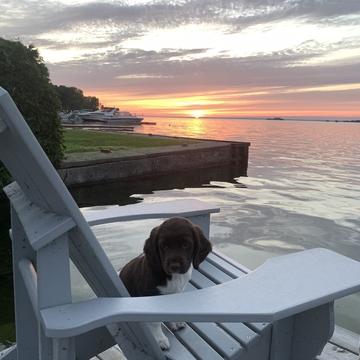 Willow enjoying a sunset