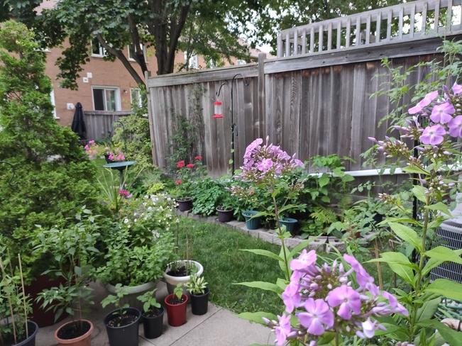 A quiet summer evening in the garden Mississauga, ON