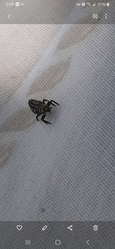 baby lady bug Kelliher, SK