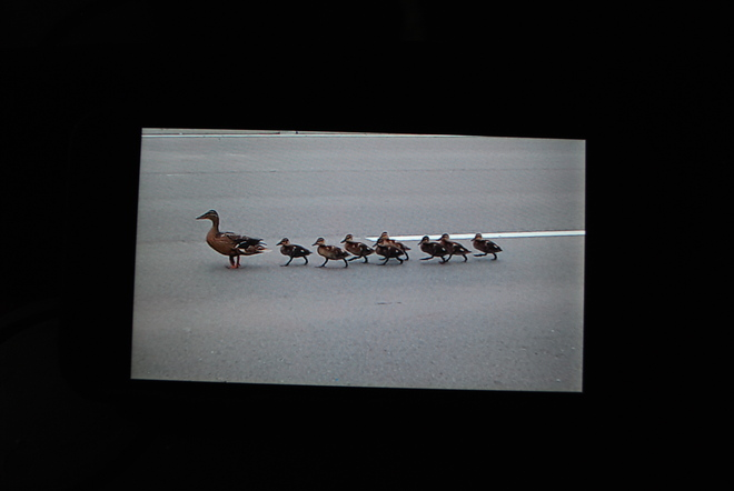 Ducks limited Caledon, ON