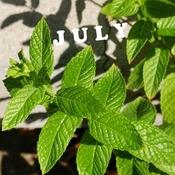 July 25 2021 Good morning! Happy Sunday:) Enjoy the summer everyone!