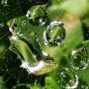 July 25 2021 28C Spider web Jade Diamond embrace the sun! Thornhill
