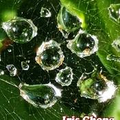 July 25 2021 26C Spider web Jade Diamonds embrace the sun!