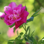 Flower In Ribbons
