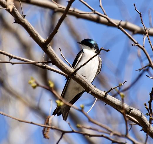 Birds Amherstburg, Ontario, CA