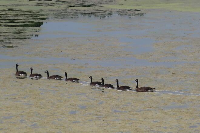 Crossing the pond Kanata, Ottawa, ON