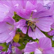 Bee, Elliot Lake.