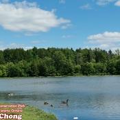 July 30 2021 19C Summer breeze! Milne Dam Conservation Park Markham, Toronto