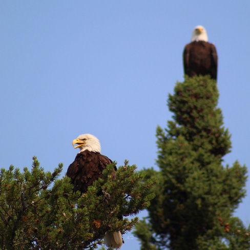 Eagle Eye 🦅 Kenora, ON