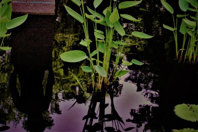 The Pond Winnipeg, MB
