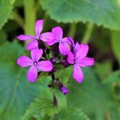 Pretty Flowers in Formosa