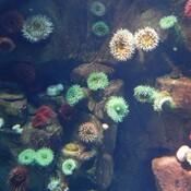 The World of Ocean