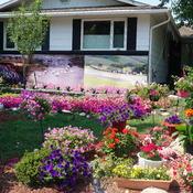 Gorgeous Flowers in my front yard in Albert Park, Regina, Sask.