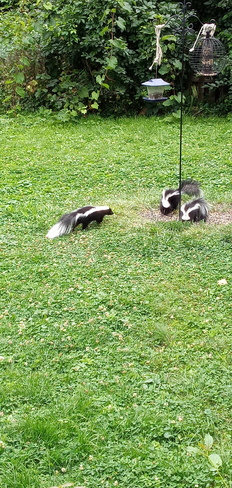 Little scavengers eating little bits Pointe-Claire, QC