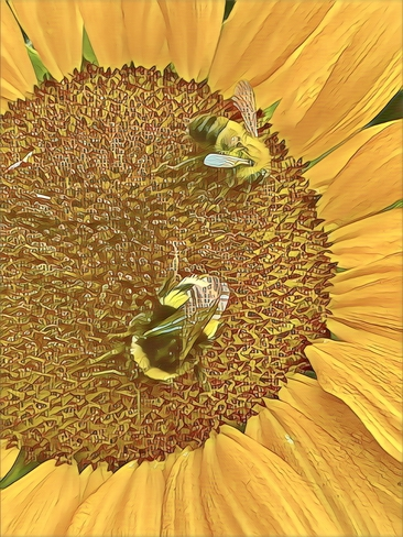 Room for two … bees 🐝 Edmonton, Alberta, CA