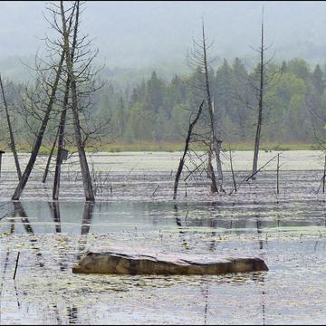 The pond, Elliot Lake.