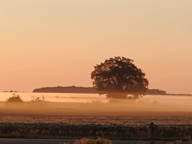 foggy morning sunrise Warwick, ON