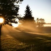 Blissful morning