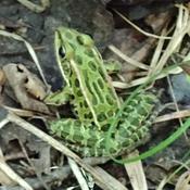 Trail hopper
