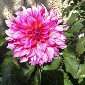 Gorgeous bloom