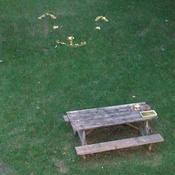 popcorn lawn cat