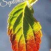 Sept 19 2021 21C Beautiful Sunday!:) Season is changing! Thornhill