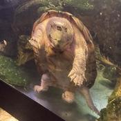 Grumpy Turtle