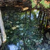 Pool of water on the Grand River bike trail.