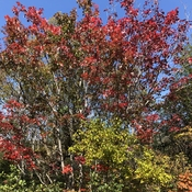A little hint of Fall