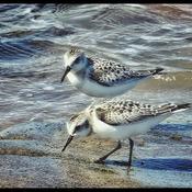 love these birds