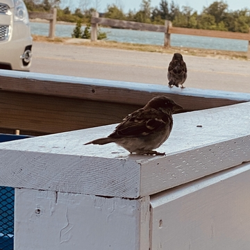 Don't feed the birds
