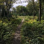 Baker's Brook Falls Trail.