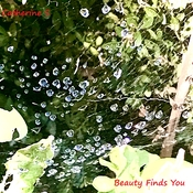 Raindrops on Cobweb