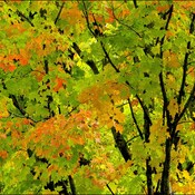 A kiss of fall, Elliot Lake.