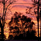 Through the trees the sun falls