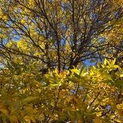 Fall in Winnipeg