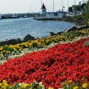 Sept 27 2021 Happy Monday!:) Nice day!Trillium Park Waterfront Downtown Toronto