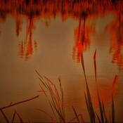 Pond Of My Past Life