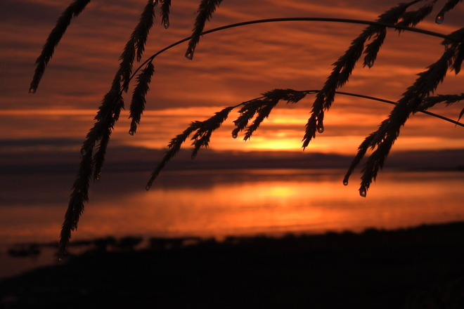 Oh those sunrises!! Royston, BC
