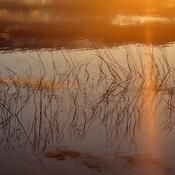 Sunrise at Elk Island NP