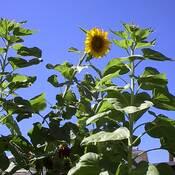 "Dear Sunflowers: I love u too much! P.S...Post""Sunflower""Malone"