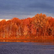 Fall scene near Ingleside Ontario