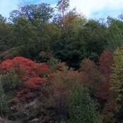 A fall drive.