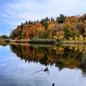 Beautiful Fall in Earl Bales Park, Toronto.