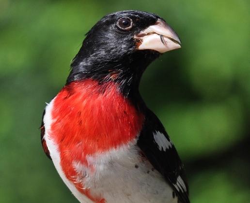 one handsome bird